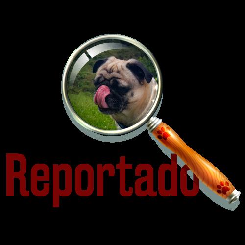 mascotas-reportado