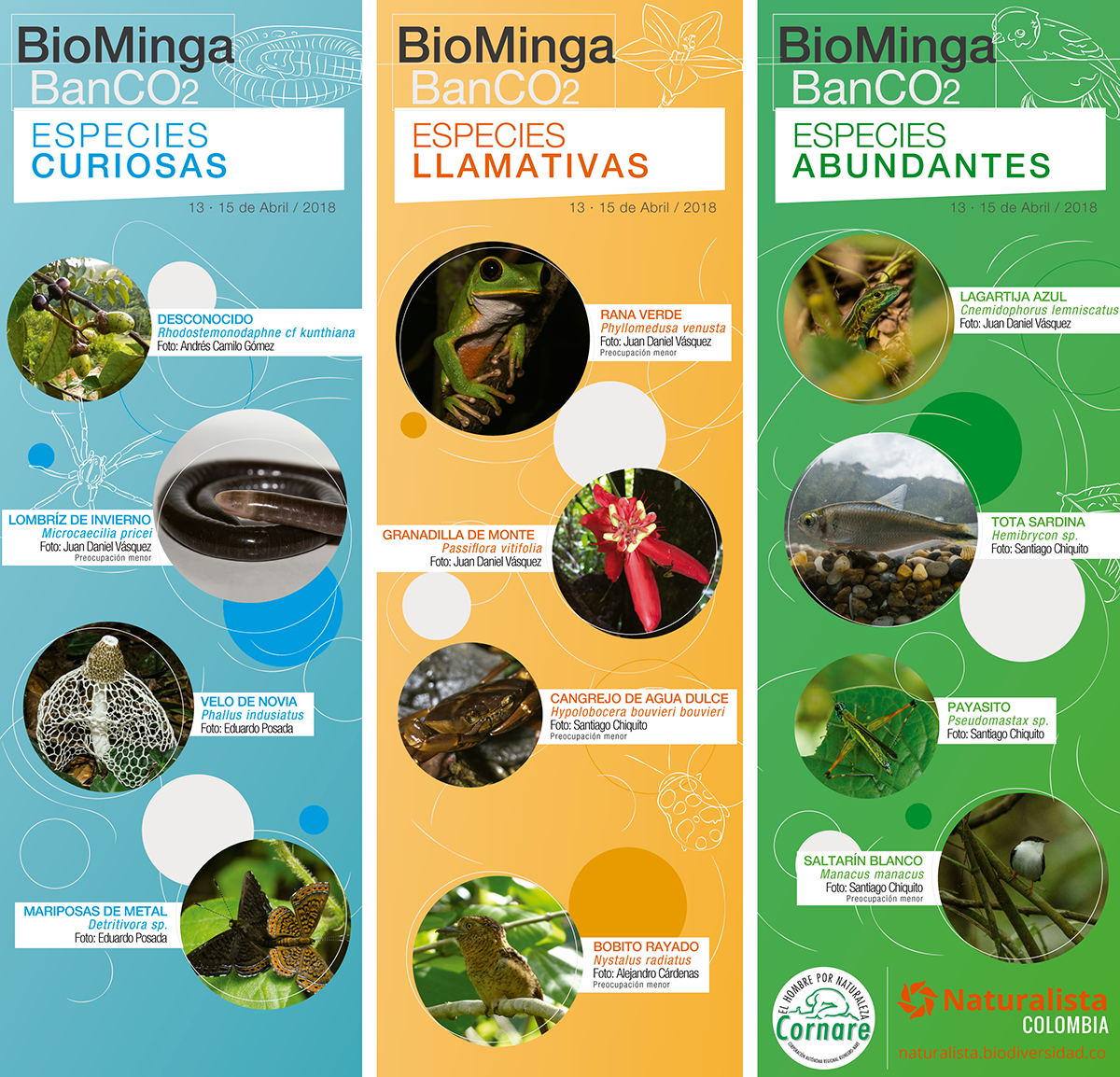 infografia-especies