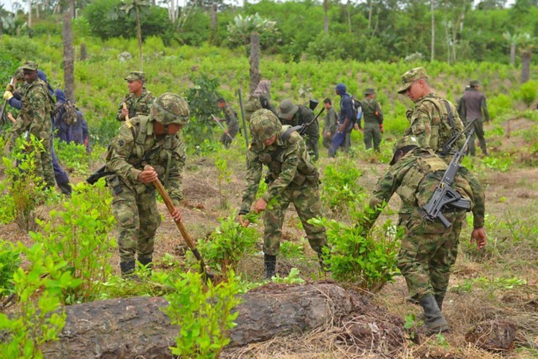 Erradicación de cultivos ilícitos de coca en Colombia.