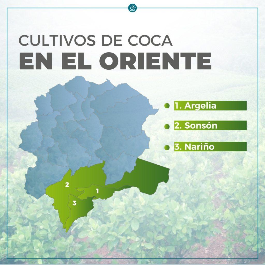 IMAGEN CULTIVOS DE COCA ORIENTE ANTIOQUENO