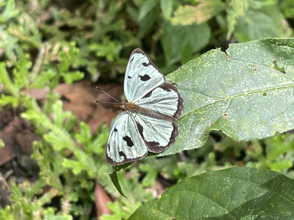 Proyecto estudio de mariposas 2