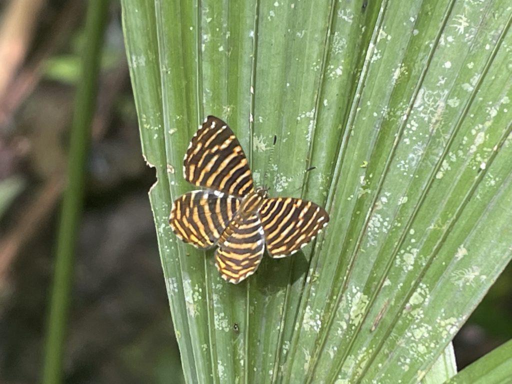 Proyecto estudio de mariposas 3