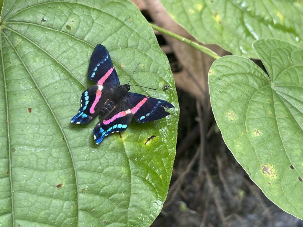 Proyecto estudio de mariposas 4