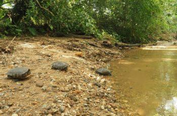 Liberación de tortugas en el Magdalena Medio Antioqueño.